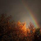 A RAINBOW IN MY GARDEN by leonie7