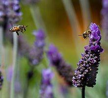 Lavender and 2 Bees by Hedoff