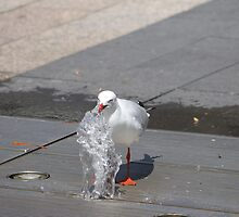 Seagull having a drink by Buddy Ahearn