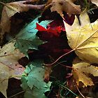 Autumn Carpet by RC deWinter