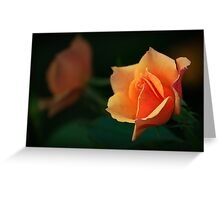 Rose light shadow Greeting Card