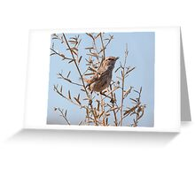 Rufous Fieldwren Greeting Card