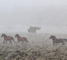 Winter Rush by Arla M. Ruggles