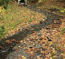 Autumn at Cultus Lake  by cielleigh
