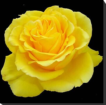 Got The Gift?: Brighten Someone's Day - Yellow Rose Gifts