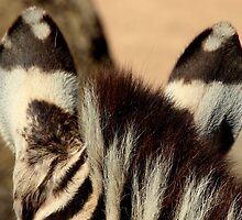 Zebra Markings 2 by Sally Haldane