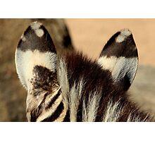 Zebra Markings 2 Photographic Print