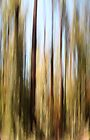 Forest iPad/iPhone by Elaine Teague