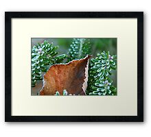 After the First Frost Framed Print