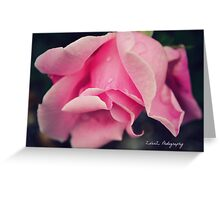 Curly Pink Rose Greeting Card