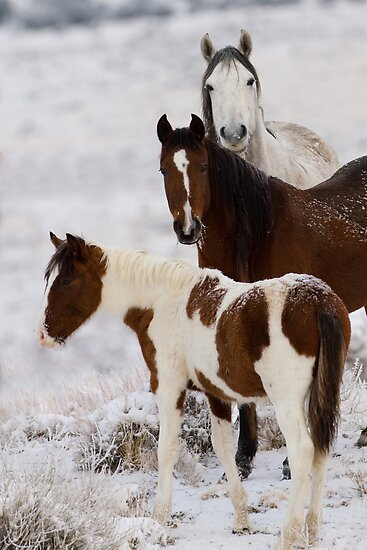 Snow Ponies by Kent Keller
