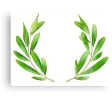 Two olive branches Canvas Print