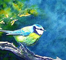 Blue Tit by Croftsie