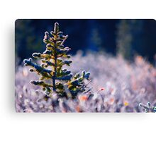 The Frosty Pine Canvas Print