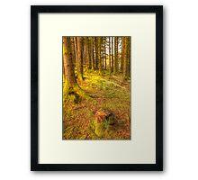 Stump woods Framed Print