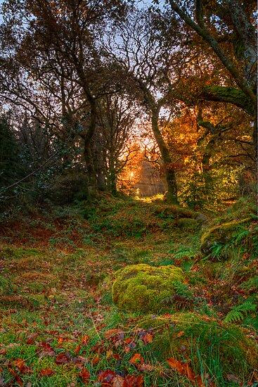 Rays of light by Darren Wilkes