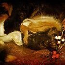 Cat Catnapping by Lois  Bryan