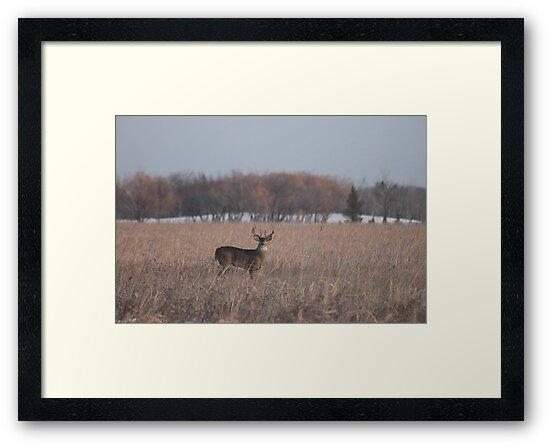 Buck  by Stephen Thomas
