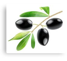 Branch with three black olives Canvas Print