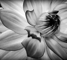 Black & White Flower by SkatingGirl