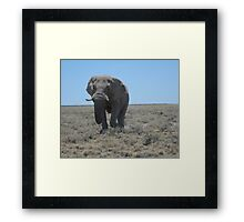 Lonely walk across the plains Framed Print