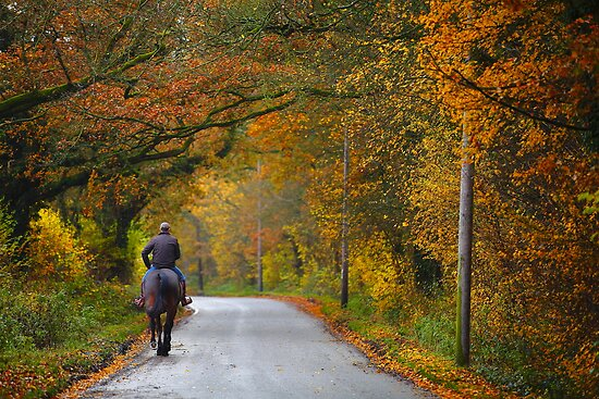 Autumn Hack  by Stephen J  Dowdell