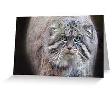 Mini Lions / balls of fur!!! Greeting Card