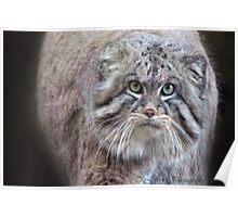 Mini Lions / balls of fur!!! Poster