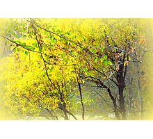 Images of Shady cove series Photographic Print