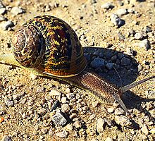 Snails Pace by Stan Owen