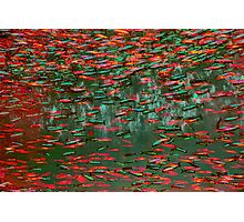 Underwater Abstract Gallery - Piece 11 (Red and Green) Photographic Print