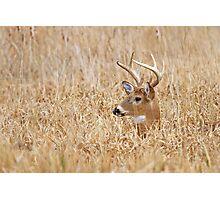 Marsh Buck Photographic Print