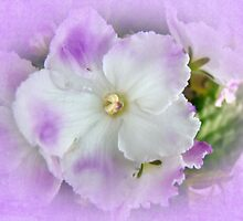 Purple and White Fancy African Violets by MotherNature