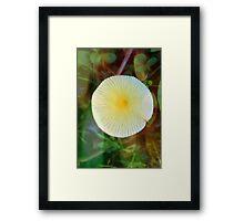 Mushroom Sun Framed Print