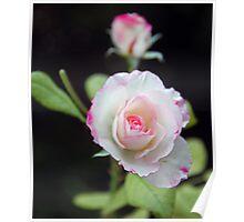 Pink Tint Poster