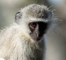 Monkey business-showing my dark side! by jozi1