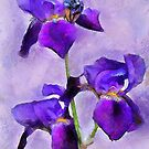 Purple Irises - painted by PhotosByHealy
