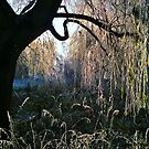 Weeping Warwickshire Willows by John Evans