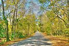 Country side of Micanopy Town in Florida by Jeremy Lavender Photography
