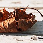 Rustic Leaf by Linda  Makiej