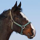 Profile of the Working Horse by lorilee