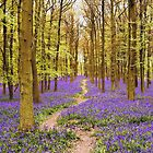 Bluebells Wood 02 by lc-photo