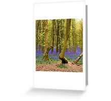 Bluebells Wood 03 Greeting Card