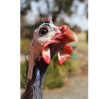 Guinea Fowl Photographic Print