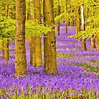 Bluebells Wood 05 by lc-photo