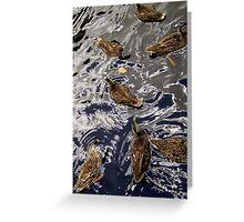 Dabbling Ducks Greeting Card