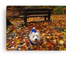 Bench and bark Canvas Print