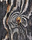 iPad Case.  Wood knot .3 by Alex Preiss
