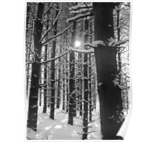 Pines in the Snow Poster