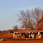 Cows by EBArt